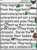 A+ Butterflies... Comprehension: Differentiated Instruction For Guided Reading