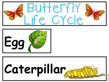 A+ Butterfly Life Cycle Labeling & Word Wall