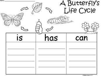 A+ Butterfly's Life Cycle ...Three Graphic Organizers