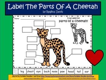 cheetah diagram a    cheetah    labels by regina davis teachers pay teachers  a    cheetah    labels by regina davis teachers pay teachers