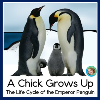 Penguin Life Cycle: A Chick Grows Up Guided Reading Book