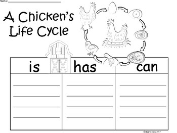 A+ Chicken's Life Cycle ...Three Graphic Organizers