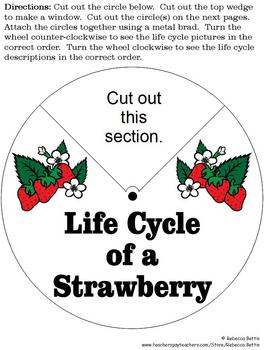 A Day at the Strawberry Patch: Cross-Curricular Activities