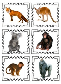 Animal Interdependency- A Day at the Zoo