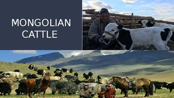 A Day in the Life of a Mongol PowerPoint Activity