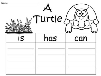 A+  FREEBIE:  Have A Turtle-rific Summer Everyone! Three Graphic Organizers