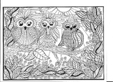 A Family of Owls Doodle, Coloring Page