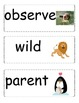 A Fox and a Kit Focus Wall Posters 1st Grade Reading Stree