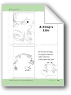 A Frog's Life: Take-Home Book