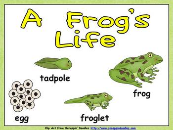 A Frog's Life Shared Reading- Kindergarten- Life Cycles