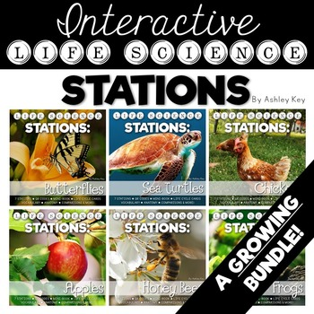 A Growing Bundle of Interactive Life Cycle Stations