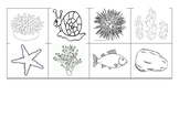 A House for Hermit Crab Sequencing Worksheet