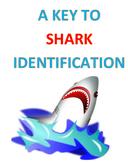A Key to Shark Identification