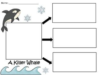 A+ Killer Whale: Three Graphic Organizers