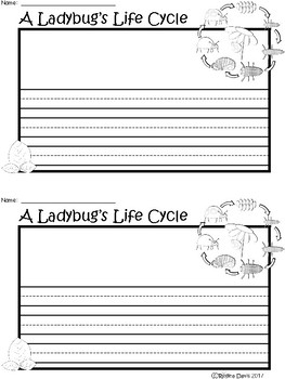 A+ Ladybug Life Cycle ... Writing Paper