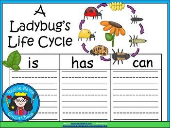 A+ Ladybug's Life Cycle ...Three Graphic Organizers