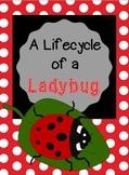 A Ladybug's Life Cycle (a cross-curricular unit)