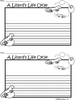 A+ Lizard Life Cycle ... Writing Paper