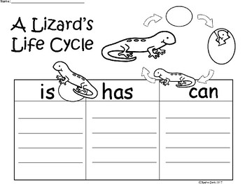 A+ Lizard's Life Cycle ...Three Graphic Organizers