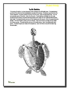 A Look at Reptiles