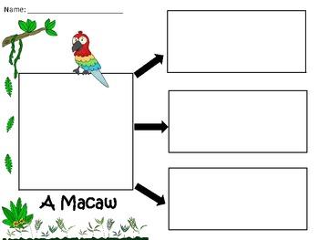 A+  Macaw... Three Graphic Organizers