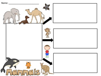 A+  Mammals... Three Graphic Organizers