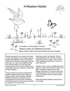 A Meadow Habitat