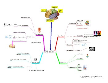 A Mind Map of the Four Cerebral Lobes of the Brain