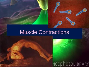 A Muscle Contraction