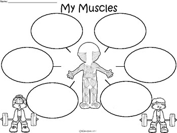 A+ My Muscles ...Three Graphic Organizers