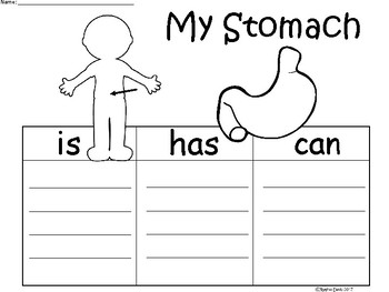 A+ My Stomach ...Three Graphic Organizers