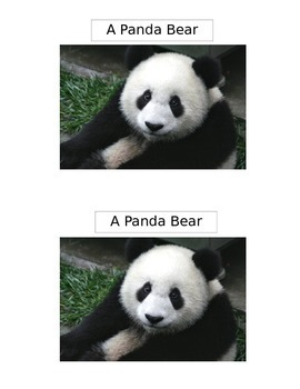 A Panda Bear Emergent Reader