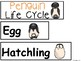 A+ Penguin Life Cycle Labeling & Word Wall