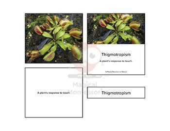 How Plants React to their Environment