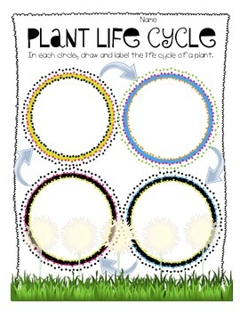 A Plant's Life Cycle