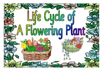 Life Cycle of a Plant and Flower-Classroom Poster Visuals