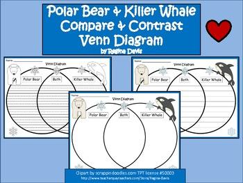 A+ Polar Bear & Killer Whale Venn Diagram...Compare and Contrast