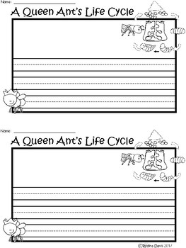 A+ Queen Ant Life Cycle ... Writing Paper