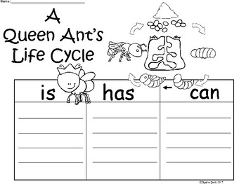 A+ Queen Ant's Life Cycle ...Three Graphic Organizers