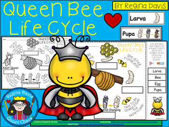 A+ Queen Bee Life Cycle Labeling & Word Wall