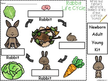 A+ Rabbit Life Cycle Labeling & Word Wall
