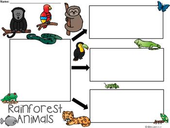 A+ Rainforest Animals ...Three Graphic Organizers