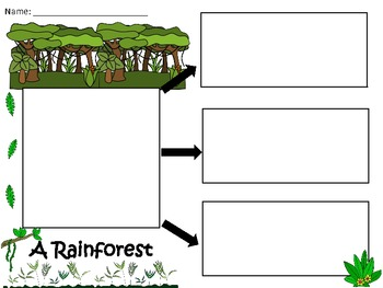 A+  Rainforest... Three Graphic Organizers