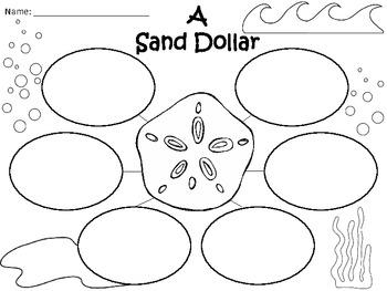 A+  Sand Dollar ... Three Graphic Organizers