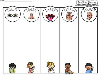 A+ Science: Five Senses Mat