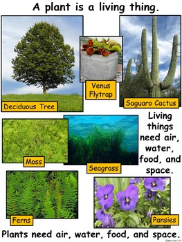 A+ Science: Living Things Need....Song, Recording Art, Word Wall, Photographs