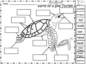 A+ Sea Turtle Labels