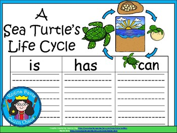 A+ Sea Turtle Life Cycle ... Three Graphic Organizers