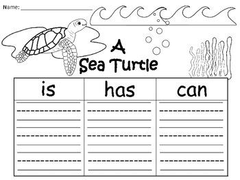 A+  Sea Turtle ... Three Graphic Organizers