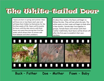 A Second Grade Production: Life Cycles of the Deer and Butterfly SmartBoard